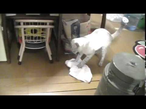 掃除する猫 - YouTube