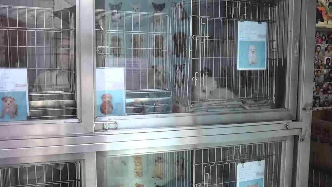 生体展示販売をするペットショップ 清水園 - YouTube