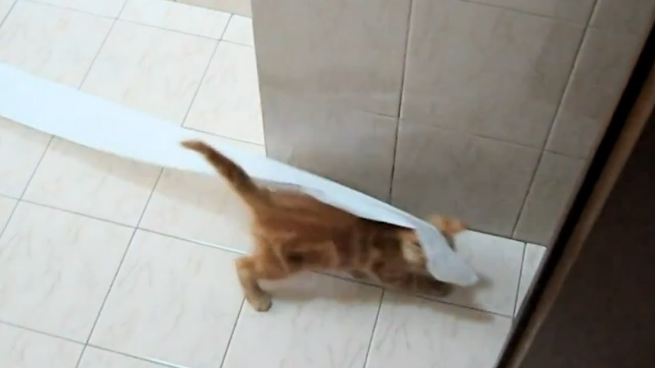 SISSI THE RED CAT - PLAY WITH A TOILET PAPER ROLL - YouTube