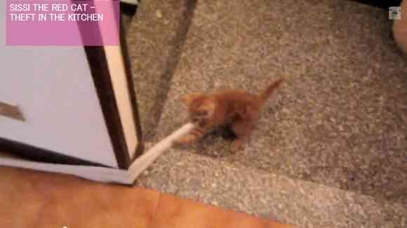 【なぜなのか】2階のトイレットペーパーをどうしても階下に引っ張っていきたい!子ネコの奮闘の一部始終 | Pouch[ポーチ]