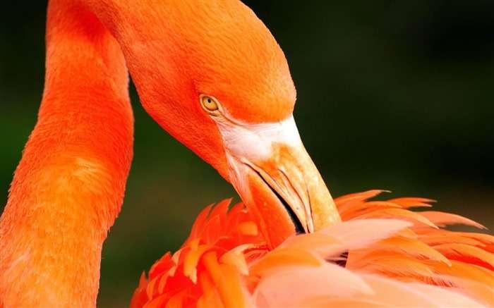 オレンジ色に染めるトピ