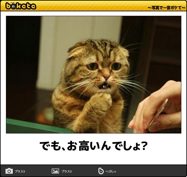 米で人気のハンバーガー「シェイク・シャック」が日本上陸へ