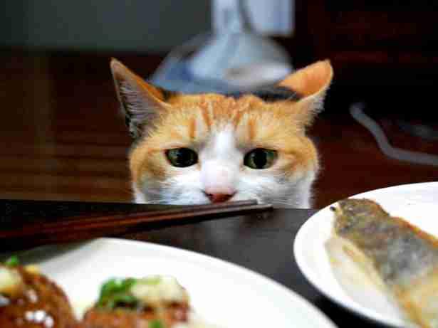 夕食のメイン、一週間で肉と魚の割合は?