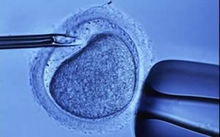 3人の親をもつ赤ちゃん誕生へ 英国議会が卵子の核移植合法化可決するも賛否両論