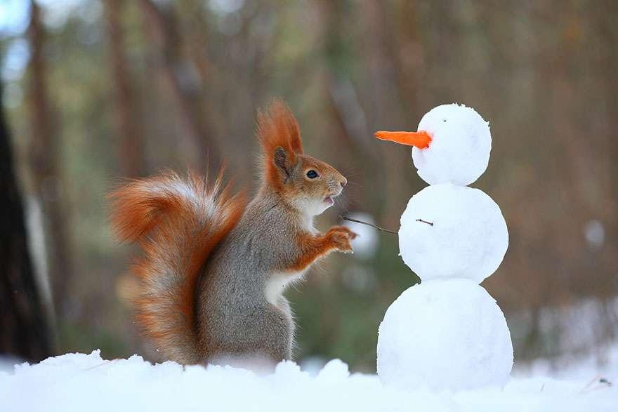 真冬に雪で戯れるリスが可愛い