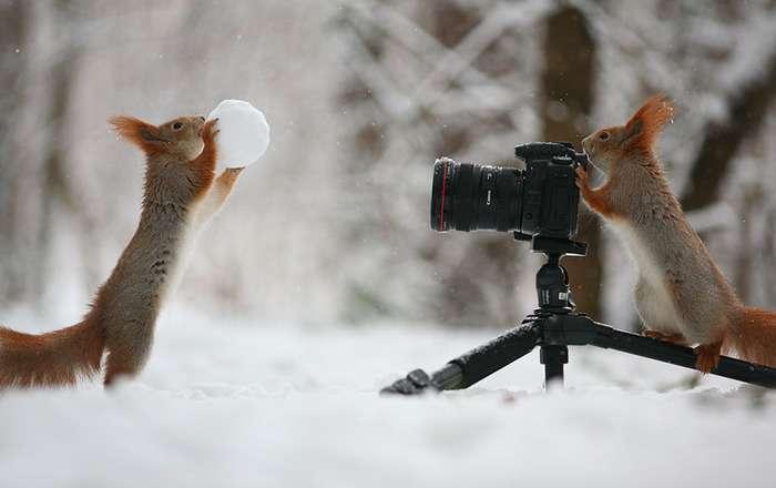 真冬に雪で戯れるリスの写真:ハムスター速報