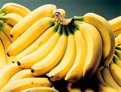 バナナ好きな方集合