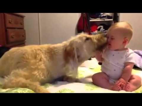 """★ 赤ちゃんが大型犬に触ろうか迷っていると・・・?大型犬から歩み寄って赤ちゃんの顔をペロペロ♫ ★ """"かわいい 犬"""" - YouTube"""