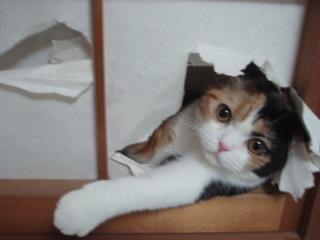 【ネコやらかす】 家族が絶叫! 駆けつけてみると…!?