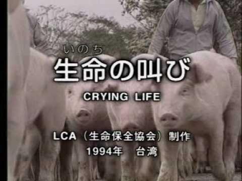 生命の叫び  畜産産業の実態 1/2 - YouTube