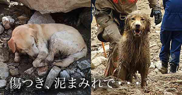 傷つき、泥にまみれ、広島で救助活動をつづける『災害救助犬』の姿16枚  –  grape -「心」に響く動画メディア