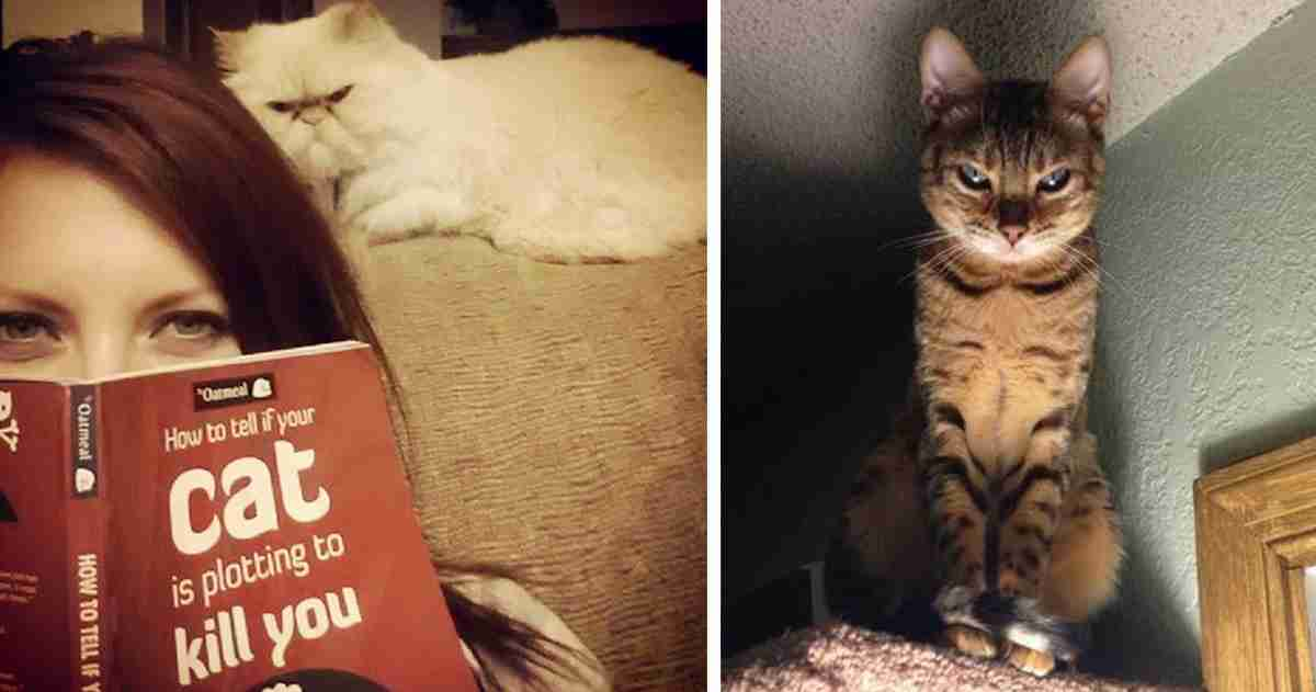 How To Tell If Your Cat's Secretly Planning To Kill You | Bored Panda