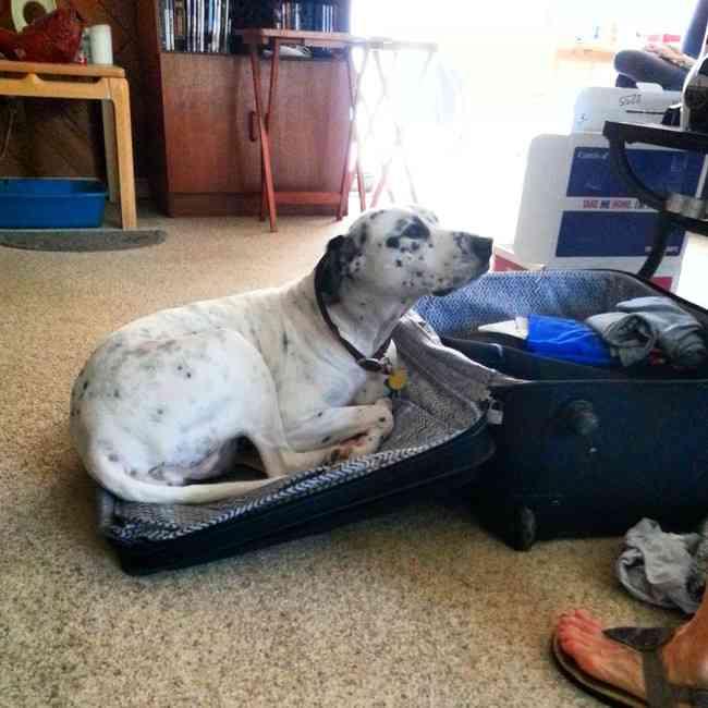 【画像】飼い主が旅行に行く気配を察知した犬と猫