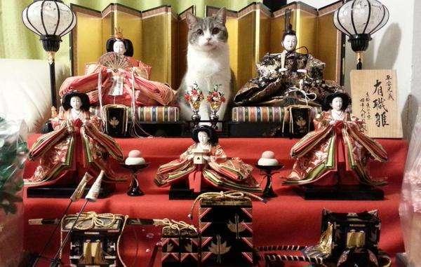 ひな壇の主役感半端ない猫wwwwwwww:ハムスター速報
