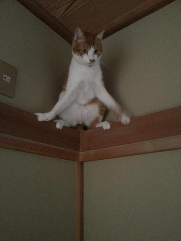 「猫の前肢てこんなに開くんだね」…猫が忍者化www