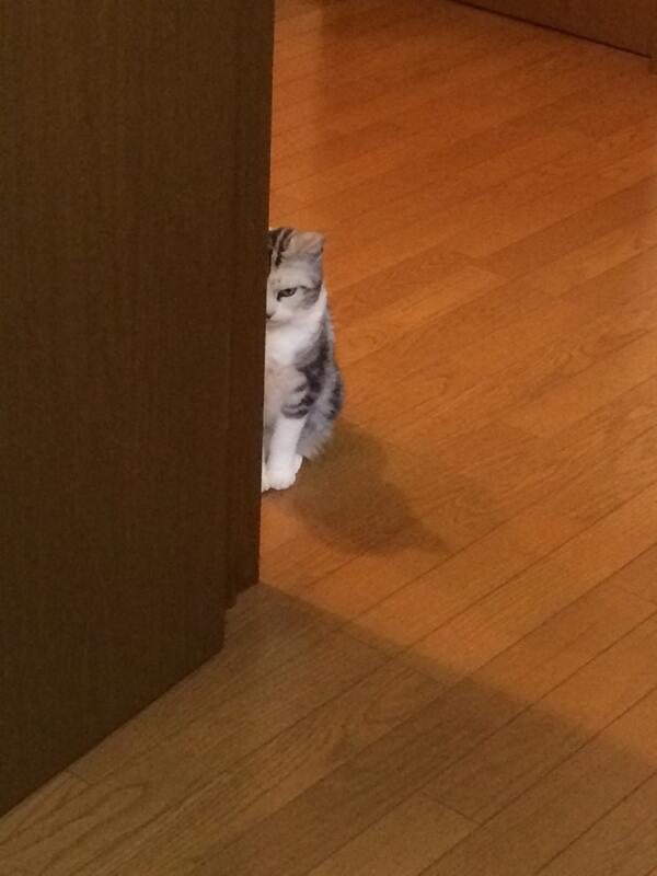 【おこ】猫を構ってやらないと大変なことになるぞ!