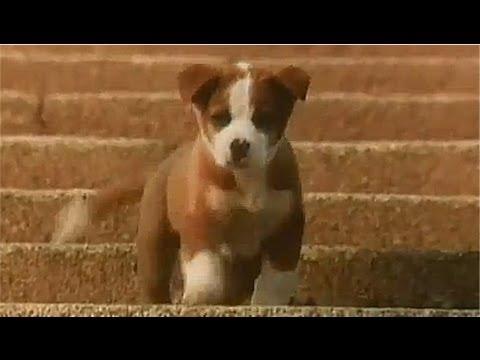 サントリー トリス ウイスキー CM 1981年 「雨と子犬」篇 - YouTube