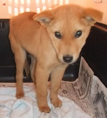 【広島土砂災害】殺処分寸前だった救助犬「夢之丞」、1人の遺体を発見