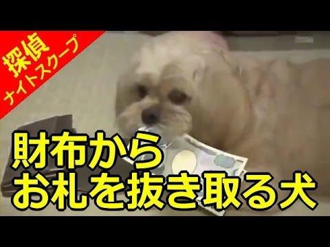 【探偵!ナイトスクープ】財布からお札を抜き取る犬(探偵:たむらけんじ) - YouTube