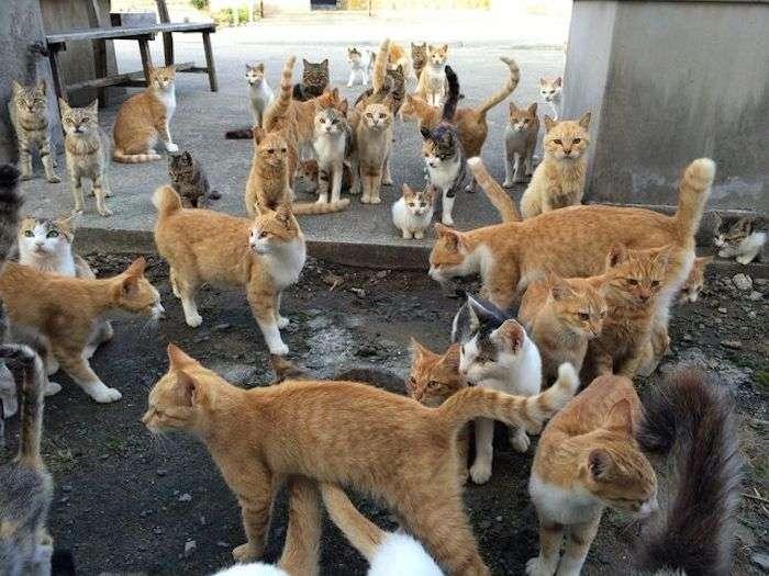 【にゃんこ島】宮城県石巻市にある田代島がネコだらけの楽園だった - TRIPHUNTER