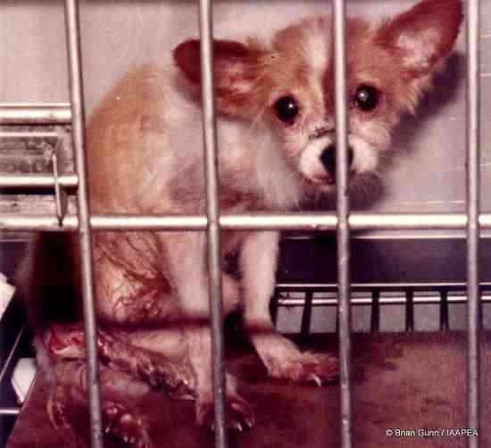 動物実験のこと   NPO法人 動物実験の廃止を求める会(JAVA)