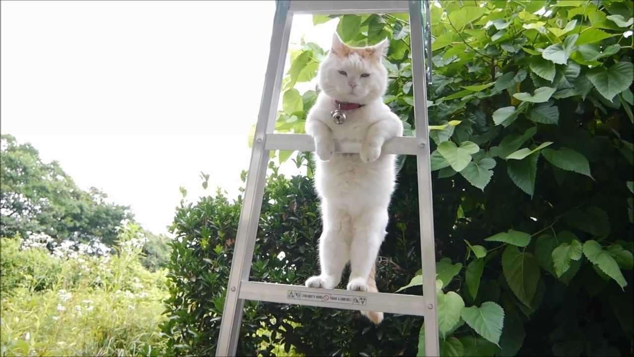 はしごの上のしろ SHIRO on the ladder - YouTube