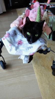飼い猫の最期を看取った杉本彩のブログが感動的だと話題に