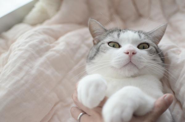 ネコに布団ドンをしてみた結果wwwwwwwwwwwwwwwww:ハムスター速報