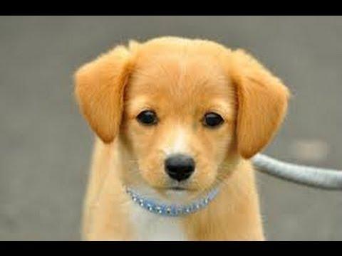 ギネスに載った世界一賢い犬。犬 - YouTube