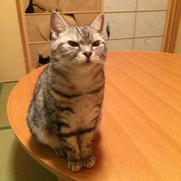 障子を突き破ったネコ 「知らないふり」も数々の物的証拠 - ライブドアニュース