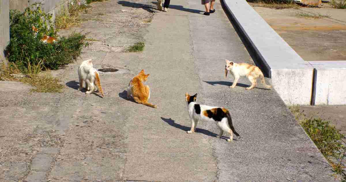 「通称:猫島」と呼ばれる瀬戸内海の男木島が、まさに猫の楽園だった! - Find Travel