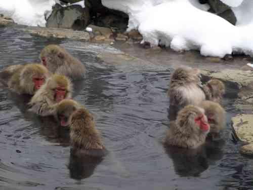 温泉で隠しますか?それともオープンですか?