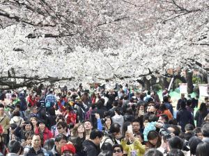 東京・上野公園、多くの花見客でにぎわう : 社会 : 読売新聞(YOMIURI ONLINE)