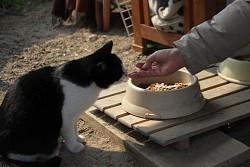 野良猫餌やり規制:条例化に疑問続出 京都市で - 毎日新聞