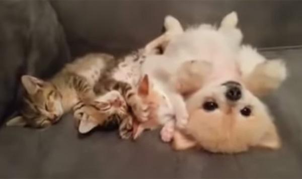 子猫が隣で寝てるから、気を遣って動かない子犬が優し可愛すぎる【動画】 - AOLニュース