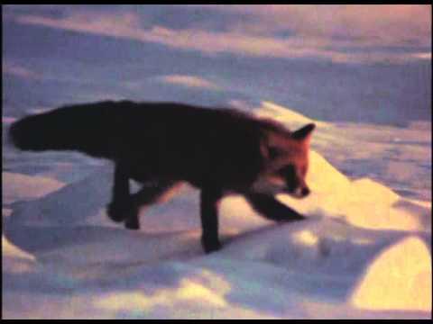 赤い狩人 - YouTube