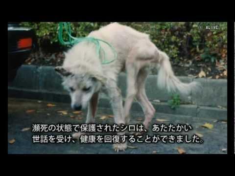 ハンカチぶんこ「実験犬シロのねがい」より―問われる動物実験 - YouTube