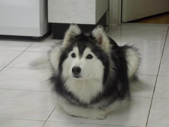 自分のこと、犬は主人とみとめていますか?