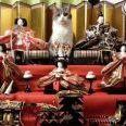 ひな壇の主役感半端ない猫www