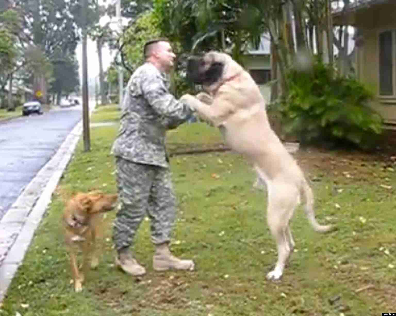 Dogs Welcoming Soldiers Home - YouTube