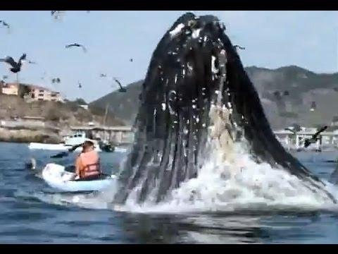 【衝撃映像】突然浮上した巨大クジラにカヤック女性パニック!【恐怖迫力】 - YouTube