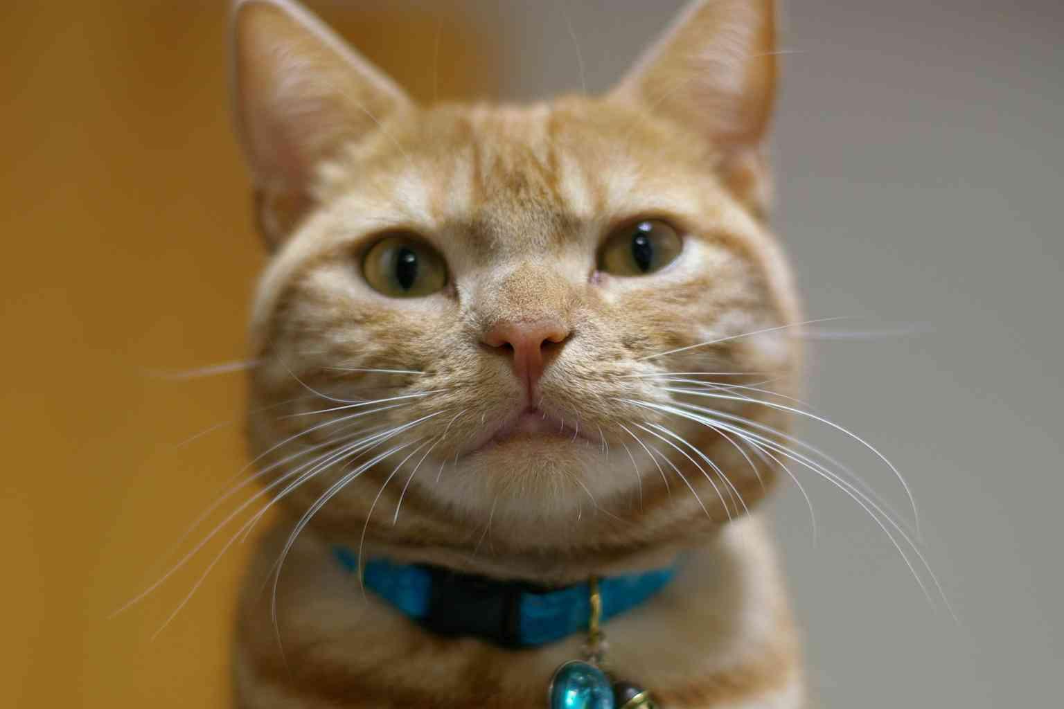 猫顔の男性芸能人