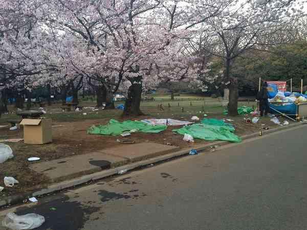 """桜が「台無し」…花見で賑わう代々木公園のゴミ""""完全""""放置"""