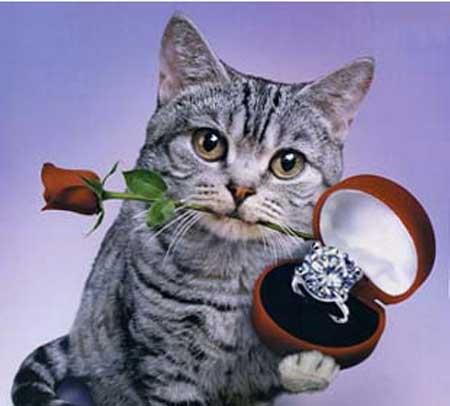 他人には羨ましがられないであろうプロポーズをされた方!