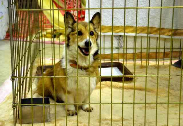 犬の殺処分、ゼロを達成 神奈川の保護センター:朝日新聞デジタル