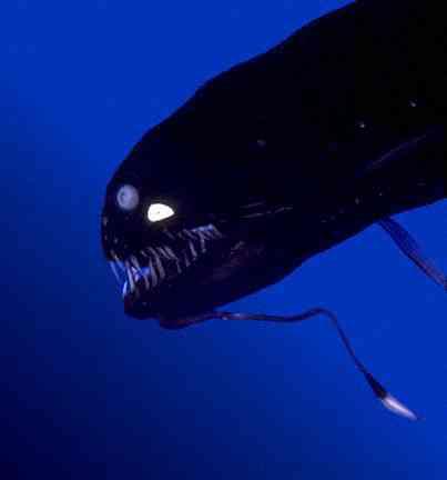 深海魚好きな人
