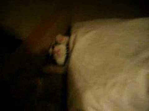 猫の素早いベッドイン - YouTube