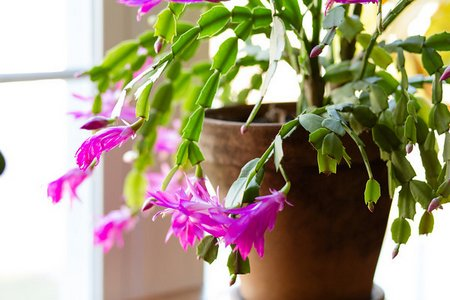オススメ観葉植物ありますか?