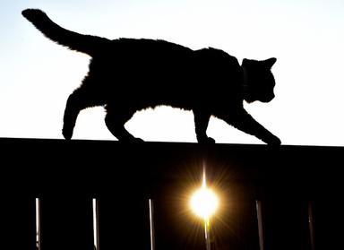 猫狩り禁止法案に猟師ら反発、野鳥保護を主張 独 写真1枚 国際ニュース:AFPBB News