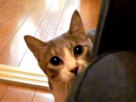 だるまさんが転んにゃ - Stalking Cat - - YouTube